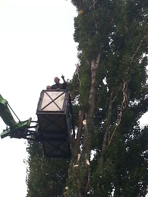 Bomen rooien 1.3